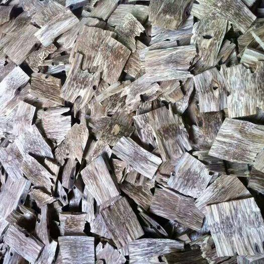 广东省茂名市化州市 批发沉香苗,沉香树,沉香片,免费提供种植及加工技术
