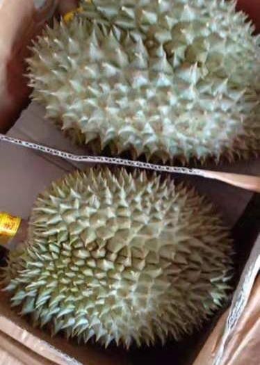 安徽省滁州市天長市金枕頭榴蓮 4 - 5公斤 50 - 60%以上