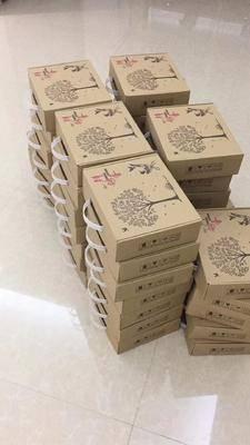 廣東省廣州市花都區白鴿蛋 食用 箱裝