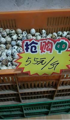 山東省臨沂市莒南縣土鵪鶉蛋 食用 散裝