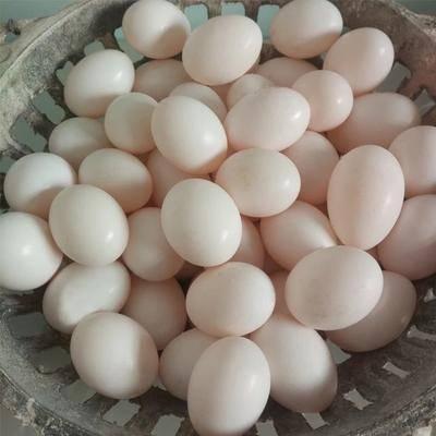 山東省臨沂市沂南縣肉鴿蛋 食用 散裝