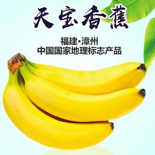 福建省漳州市平和县 漳州天宝香蕉绿皮香蕉生蕉发货没有催熟剂更健康净重5斤装