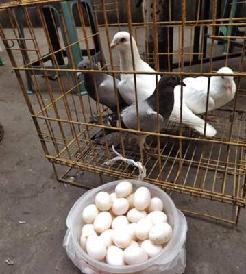 廣西壯族自治區欽州市浦北縣白鴿蛋 食用 箱裝