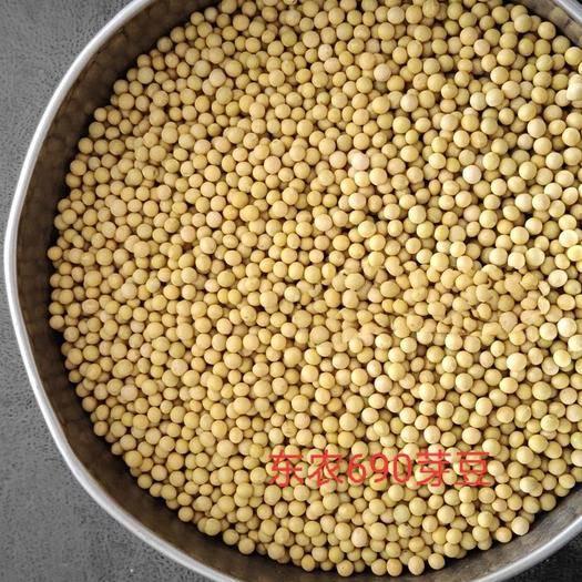 黑龙江省齐齐哈尔市依安县 芽豆690,发芽率98%以上,8层塔选,上车价,蛋白45以上