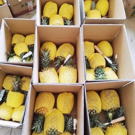 浙江省金华市婺城区金菠萝 9斤装