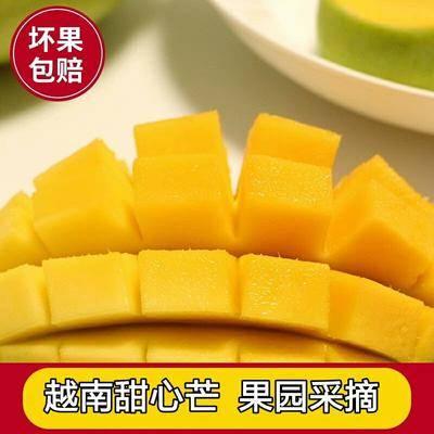 云南省紅河哈尼族彝族自治州紅河縣甜心芒 果園采摘 香甜細膩 一件代發