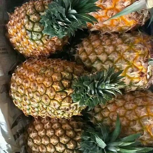 河北省邯郸市丛台区 河北邯郸徐闻菠萝大量我处各种水果蔬菜