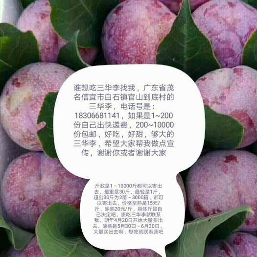 广东省茂名市信宜市 丽晶三华李40-50mm又大又甜