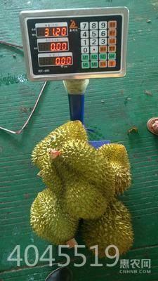 金枕頭榴蓮 4 - 5公斤 80 - 90%以上