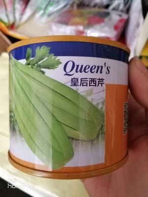 河南省商丘市夏邑縣法國皇后芹菜種子 大田用種 ≥99% 盒裝