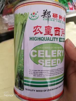 河南省商丘市夏邑縣西芹種子 鄭研農黃西芹,有問題,咨詢我。