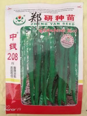 河南省商丘市夏邑縣線椒種子 鄭研中線208線椒種子,產量高