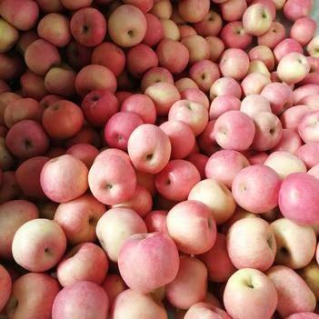 棲霞蘋果 棲霞紅富士