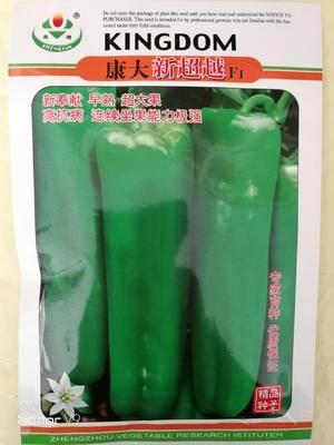 河南省商丘市夏邑縣牛角椒種子 康大系列尖端品種,就是好!