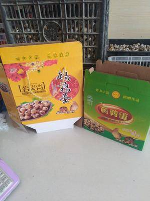 河南省南陽市方城縣土鵪鶉蛋 食用 箱裝