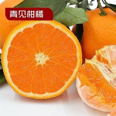 四川省攀枝花市仁和區青見柑桔 統貨 2 - 3兩