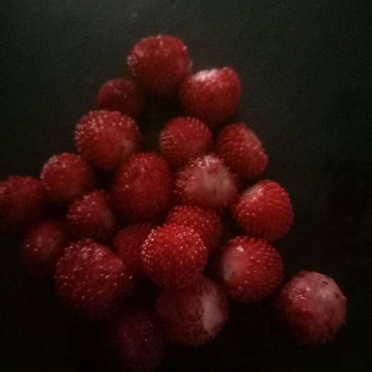 四川省广安市前锋区蛇莓