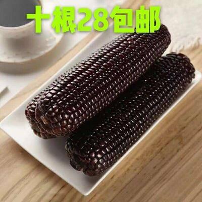 山西省忻州市五台县黑玉米 8支免费包邮一件发货