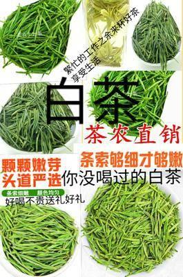 河北省唐山市遷安市安吉白茶  一級 袋裝 白茶你沒品嘗過的白茶好喝不貴