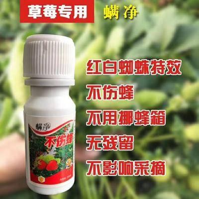 河南省鄭州市管城回族區果樹病蟲害防治 草莓殺蜘蛛高效,無殘留