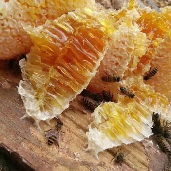 野生蜂蜜 玻璃瓶裝 2年以上 100%