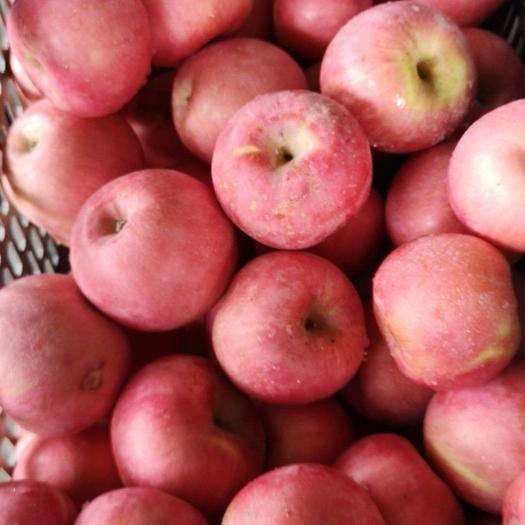 云南省昭通市魯甸縣昌紅富士蘋果 70mm以上 全紅 紙袋