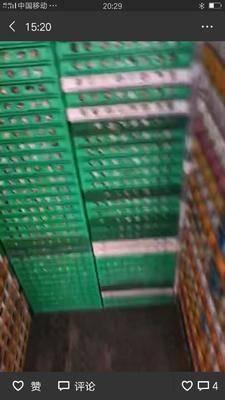四川省成都市新都区黄羽鹌鹑蛋 食用 箱装