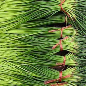 紅帽蒜苔 蒜薹鮮嫩,隨時有貨,