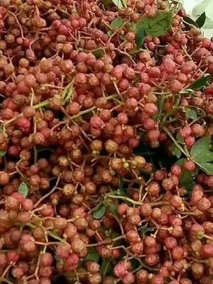 花椒有卖-价格花椒-图片花椒/货源视频餐饮v花椒图片