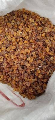 廣東省廣州市荔灣區桃膠 小珠0.8到1.0的60一公斤 0 8以下50一公斤