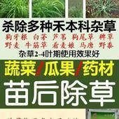 氟吡甲禾灵 蔬菜/瓜果/药材 除禾本科草