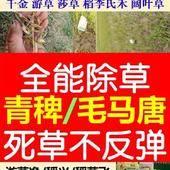 双草醚 水稻旱稻全能除草,青稗/毛马唐不反弹