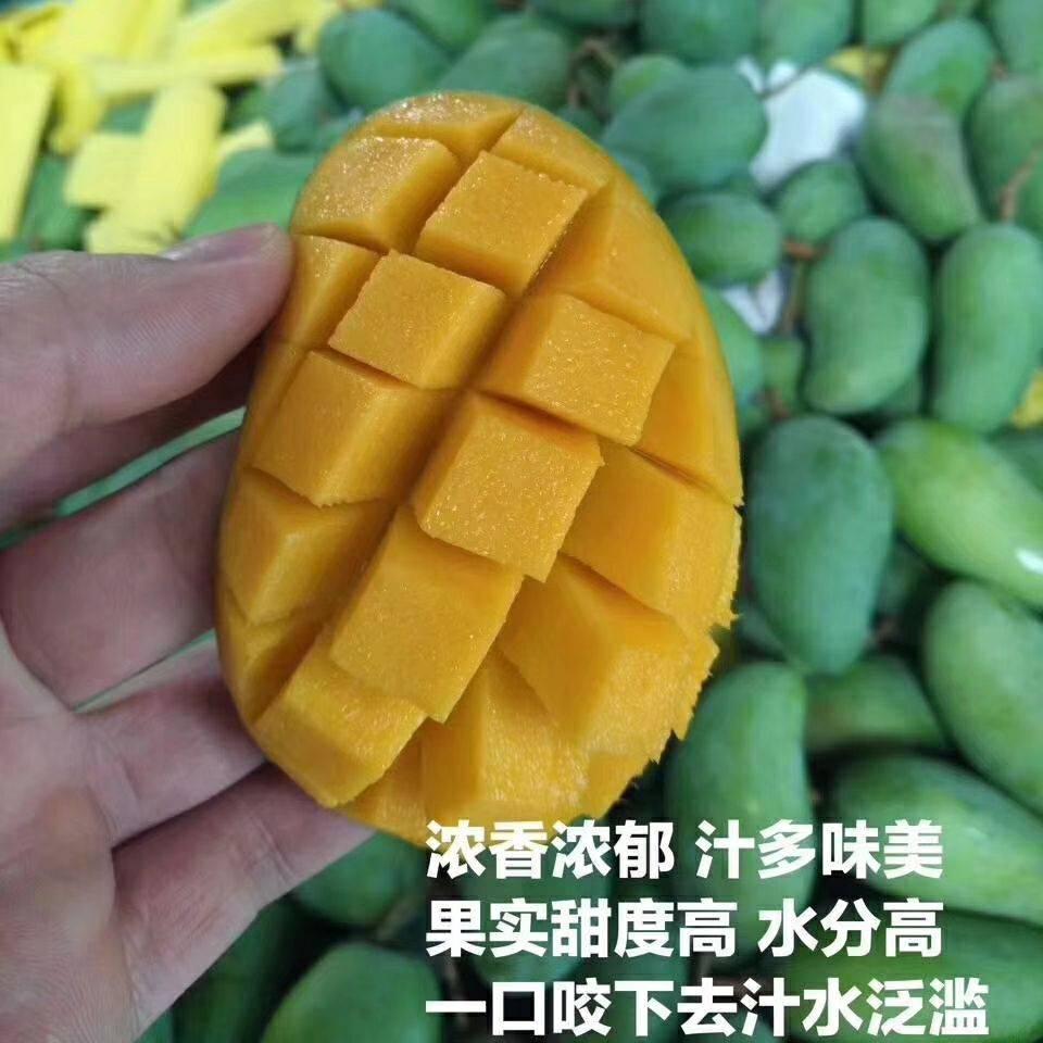 甜心芒 果園采摘 香甜細膩5/8/9斤裝