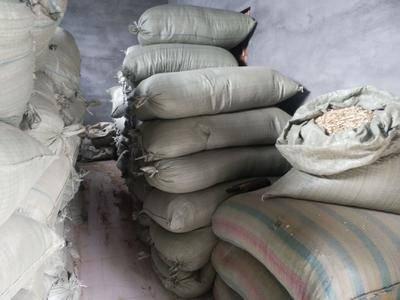 河北省保定市安國市白榆種子 批發純新,優質白榆樹籽