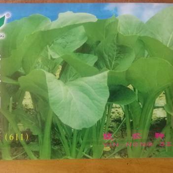 閩南油菜種子