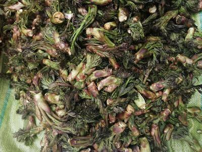 吉林省延邊朝鮮族自治州延吉市 東北刺老芽山野菜