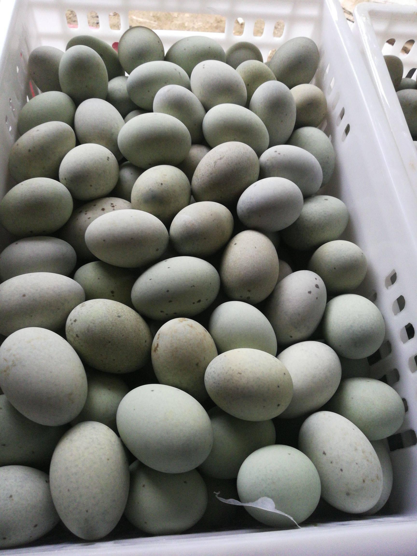 [松花皮蛋批发]松花皮蛋价格0.86元/斤