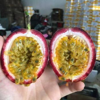 新鲜热带水果 越南品种百香果 西番莲鸡蛋果 产地供应 现摘