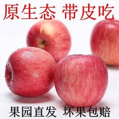云南省昭通市昭陽區紅富士蘋果 60mm以上 片紅 紙袋