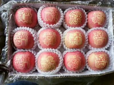 陜西省銅川市印臺區水晶富士 陜西銅川紅富士