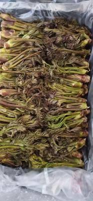 遼寧省大連市金州區刺老芽 散裝 露天 鮮貨