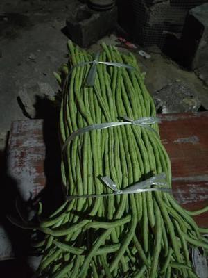 廣西壯族自治區玉林市博白縣長豇豆 40cm~70cm
