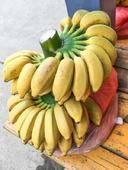 小米蕉米蕉