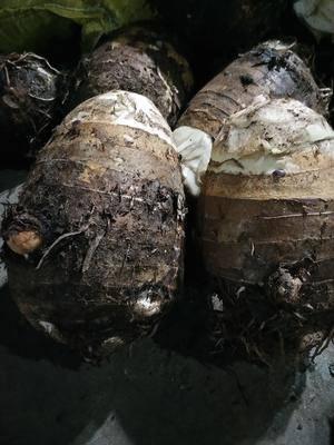 海南省海口市瓊山區 海南粉香芋!包你滿意!不粉退一斤反十斤。