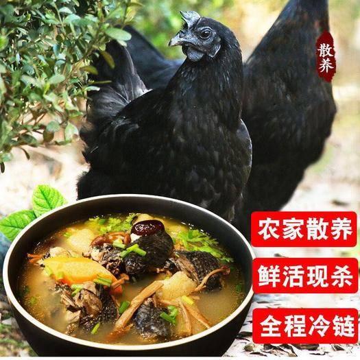 江西省南昌市南昌县土乌鸡 净重1.8斤一2.5