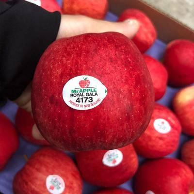海南省海口市美蘭區 新西蘭紅玫瑰蘋果12顆裝進口加力果嘎啦紅蘋果新鮮包郵一件代