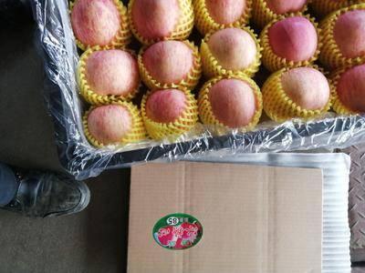 山東省淄博市沂源縣 山東沂源紅富士蘋果大量供應,現貨量大