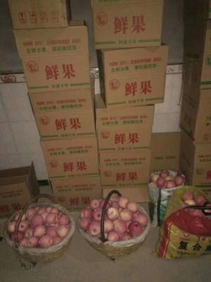 陜西省咸陽市永壽縣 供應大量蘋果