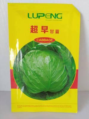 山東省濰坊市壽光市綠甘藍種子 甘藍種子  超早甘藍