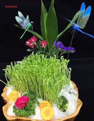 山西省太原市小店區 鮮活仿生態豌豆苗